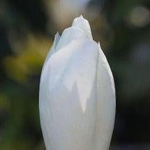 """""""春の訪れ"""""""