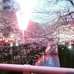 画像 目黒川の桜 の記事より