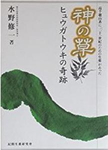 日本山人参 ヒュウガトウキ 山人参 飲む健康茶 効能 販売 購入