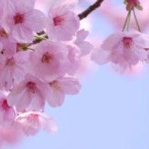 新しい春、スタートが…