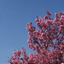 春がキタっ!