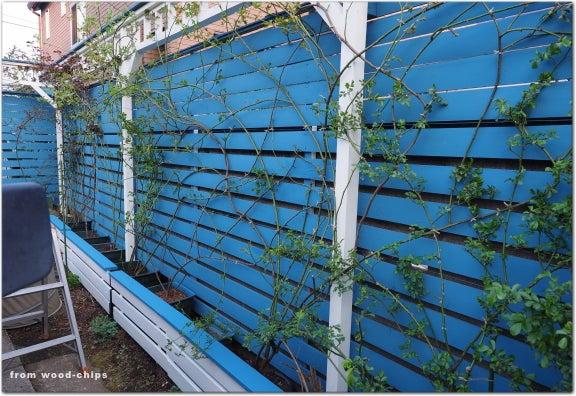 バラの庭 フェンス 誘引 東大和市