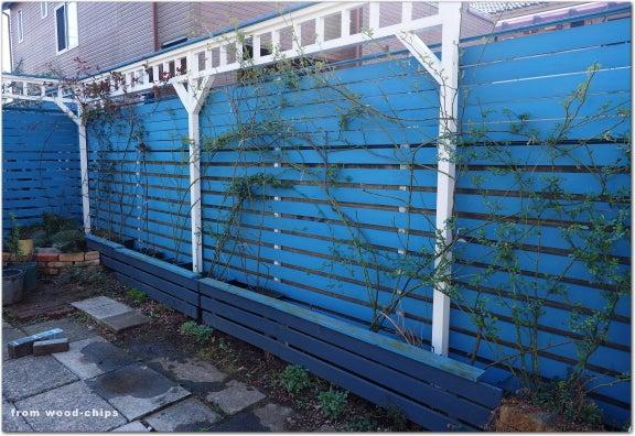 バラの誘引 木製フェンス
