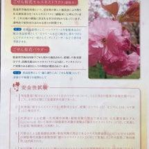 今月は桜アロマでヨガ