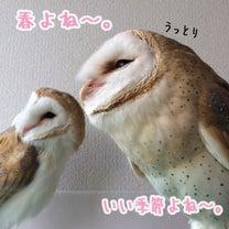 川口西公園はオススメ桜スポットよ〜の記事に添付されている画像