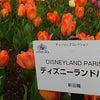 咲いた咲いたチューリップの花がの画像