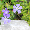 春の花の画像
