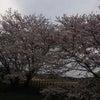 最寄り駅の桜の画像