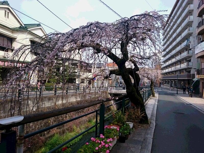 枝垂れ桜 Ⅰ