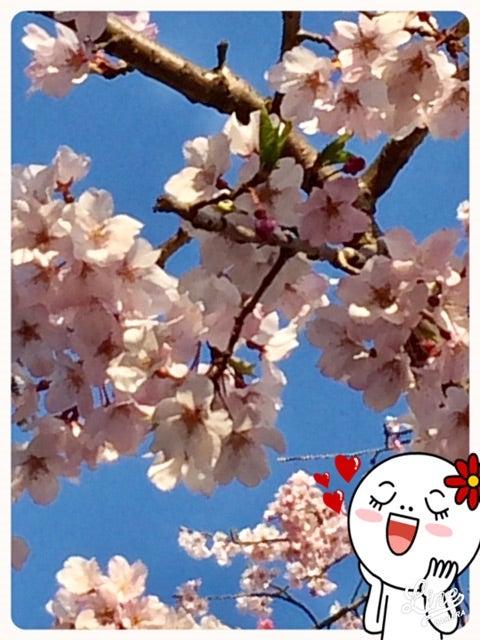 o0480064013907211291 - ☆4月5日 (水) ☆toiro西谷