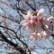 春が来た!!!/今月…
