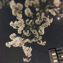 花を見上げる。