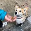 インターペットで出会った可愛いワンちゃんをご紹介しちゃいます(*´罒`*)の画像