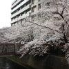 桜☆の画像