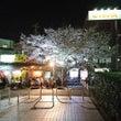 どこか懐かしい夜桜の…