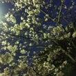 ♪春ですね♪