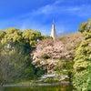 明治神宮 お花見の画像
