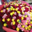 【あふれる愛】バラ2…