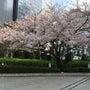 桜満開・お花見日和・…
