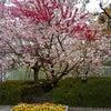 花さんぼ~近場の花の画像