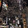 銀座の桜だよ〜〜^_…