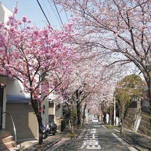 平戸に春が来て『ラシット横浜 サン・ガーデン平戸 全29棟(第2期・3区画)』販売開始!の画像