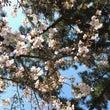 桜の木と松の木