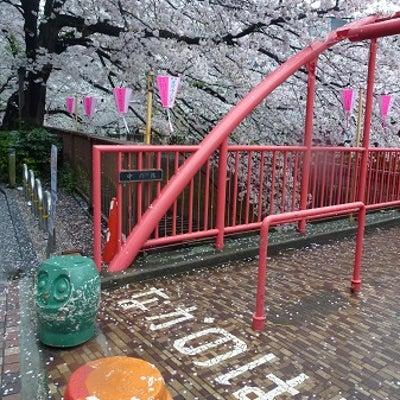 中目黒 TVのロケ現場でよく使われる橋と桜の記事に添付されている画像