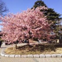 """""""桜の季節☆"""""""