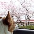 祝!ブログ6周年ヽ(…