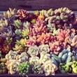 zippy-hana…