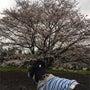 おでの桜しゃんでし!