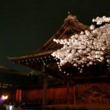 靖国神社の夜桜と能