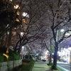 通りがかりの夜桜に 惰眠していた感受性が目覚めたの画像
