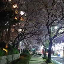 通りがかりの夜桜に …