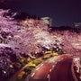 夜桜のあと、火鍋☆六…