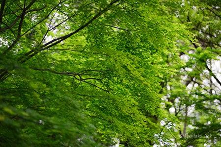 木々の新しい葉