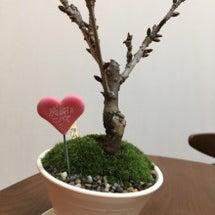 開花!!!