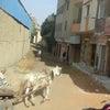入エジプト記86 こんな街角の写真が撮りたかったの画像