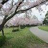 桜、満開ですの画像