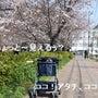 桜の季節は墨田区から…