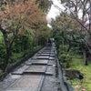 京都へお花見  (高台寺&波ぎ茶寮)の画像