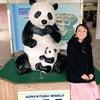 アドベンチャーワールド☆赤ちゃんパンダに浸る♪の画像
