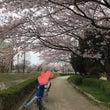 武庫川沿いでお花見