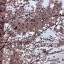 春、サプライズな喜び…