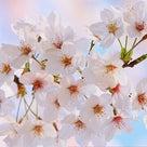 春を感じるの記事より