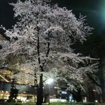 今年の桜の満開が楽し…