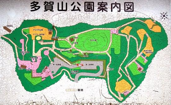 【写1】東福寺城