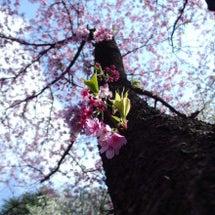 春、桜を楽しむと共に…