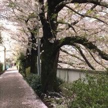 桜の絨毯★